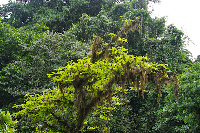 Rio Llanito, route de Santa Fe à Guabal, 350 m (Veraguas, Panamá), 19 octobre 2014. Photo : J.-M. Gayman