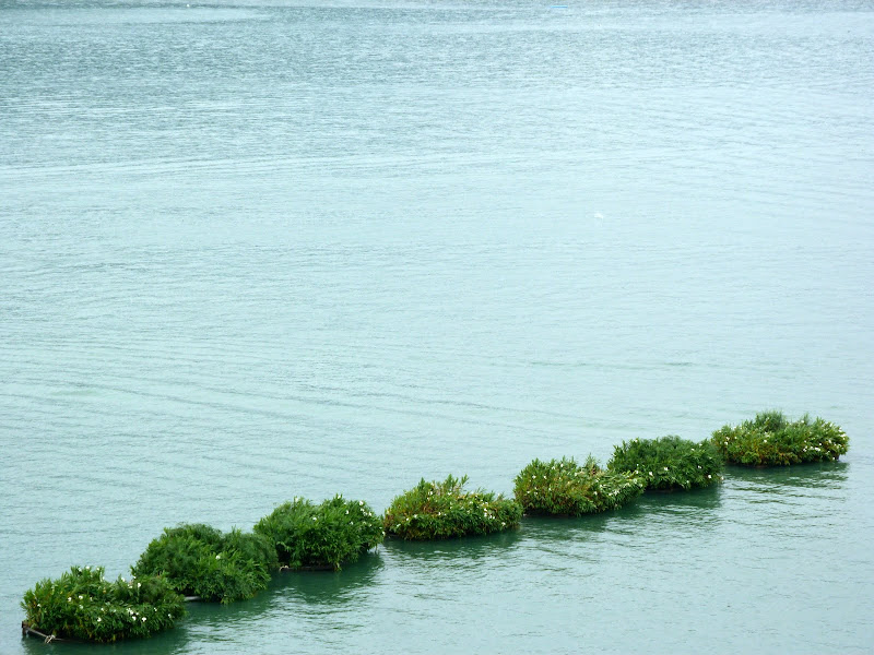 Abris flottants artificiels pour les poissons, technique aborigène locale