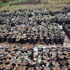 Высадка 300 молодых дубов 015.jpg
