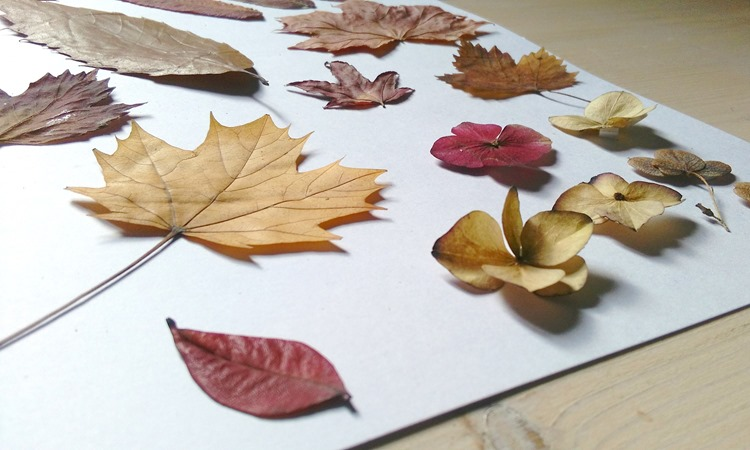 adhering leaves to card stock