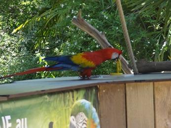 2017.06.17-030 spectacle de perroquets