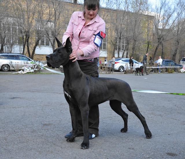 Кубок Аризоны-14(ПК)+ЧРКФ, Красноярск, 27 апреля 2014 DSC_6114