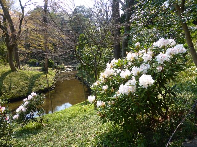 Cath hk jardin de koishikawa korakuen tokyo japon for Le jardin korakuen