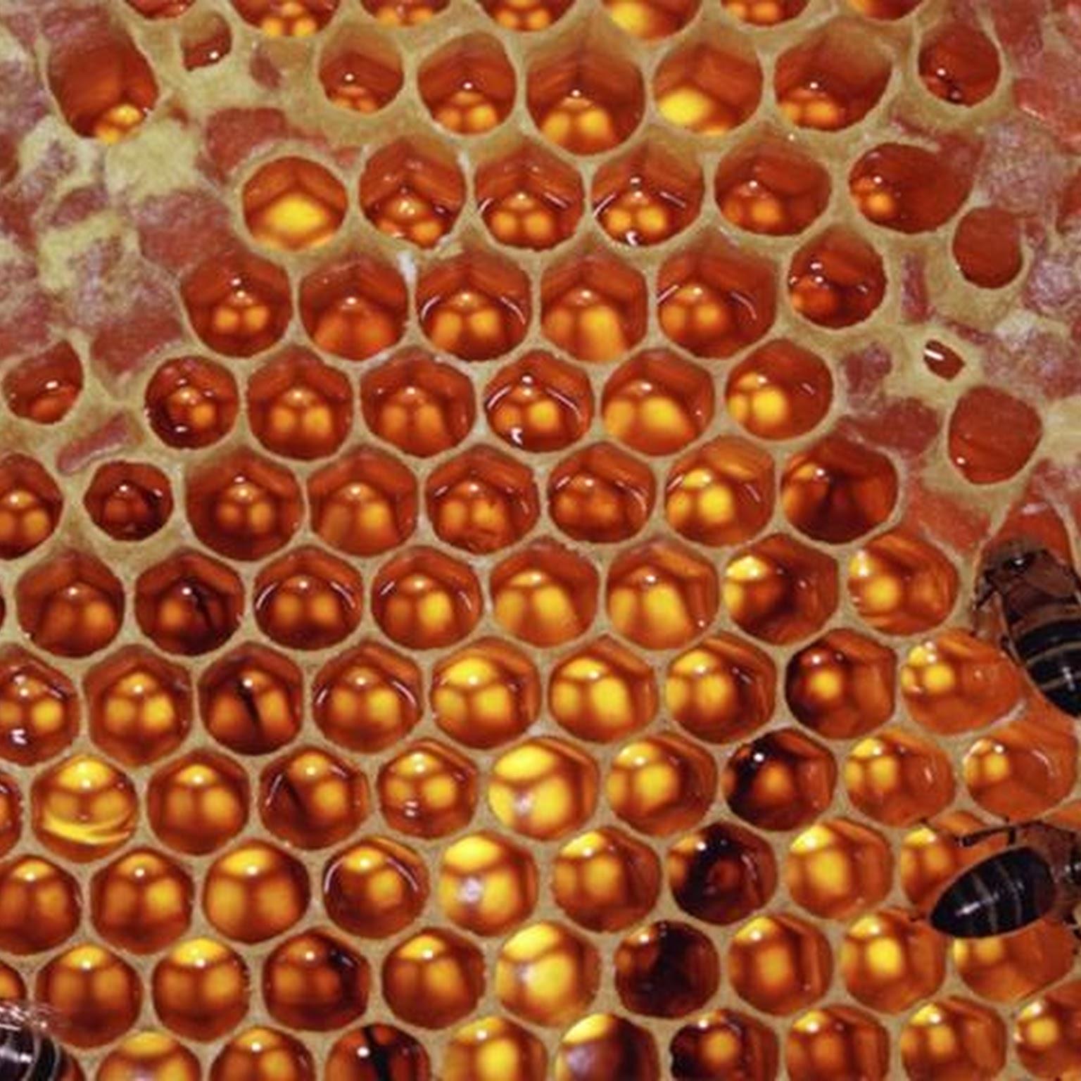 Honeycomb.jpg 3fw 3d593 26h 3d261 26crop 3d1