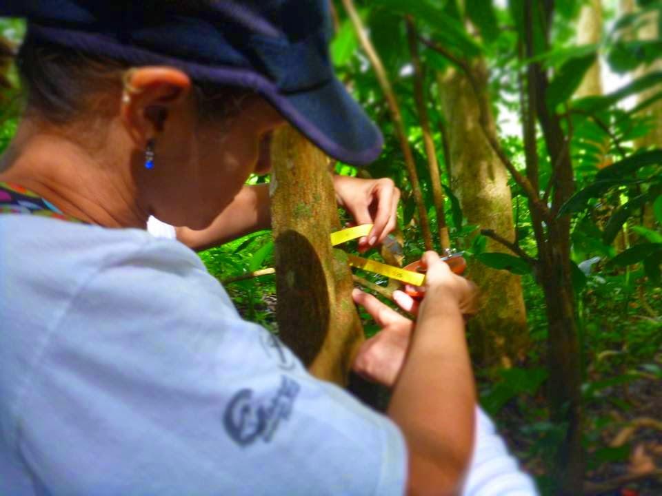 Sobre-aves-y-bosques_observa-sus-arboles-y-plantas.jpg