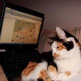 'Das macht sie IMMER sobald ich mit dem Notebook auf dem Sofa liege ;)'