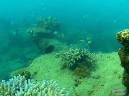 family trip pulau pari 090716 GoPro 50