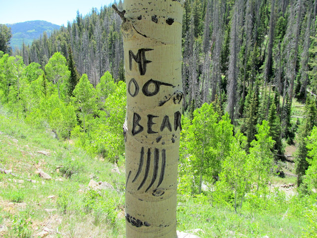 M.F. O.O. Bear
