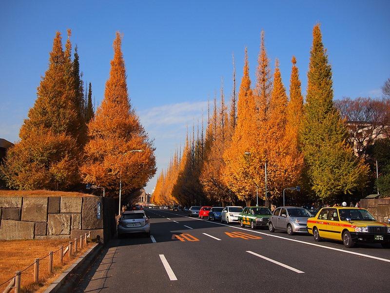 ginkgo-avenue-tokyo-9