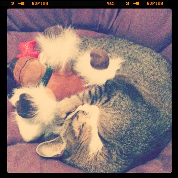 bubby sleeping with his reindeer