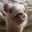 Hugo Duarte's profile photo