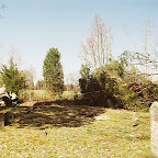After the rope was secured in the tree, the other end was taken across the road and looped around a small tree.  Then it was attached to Owen's tractor.  When Owen had cut almost through the tree, George drove the tractor to pull the tree in the desired direction away from the grave stones.