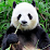 KC Kecheng's profile photo