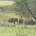 जिला अनूपपुर तहसील पुष्पराजगढ के अंतर्गत ग्राम पुरगा में जंगली हाथी का आया पूरा दल