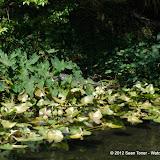 04-04-12 Hillsborough River State Park - IMGP4419.JPG