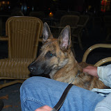 KNON-honden in Emmen - DSC_0851.JPG