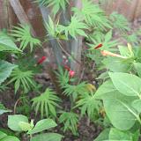 Gardening 2012 - IMG_3270.JPG