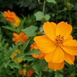 Gardening 2013 - 115_5987.JPG