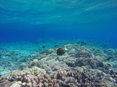 Snorkeling pass SE - Tahanea