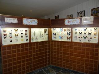 2016.03.14-015 papillons