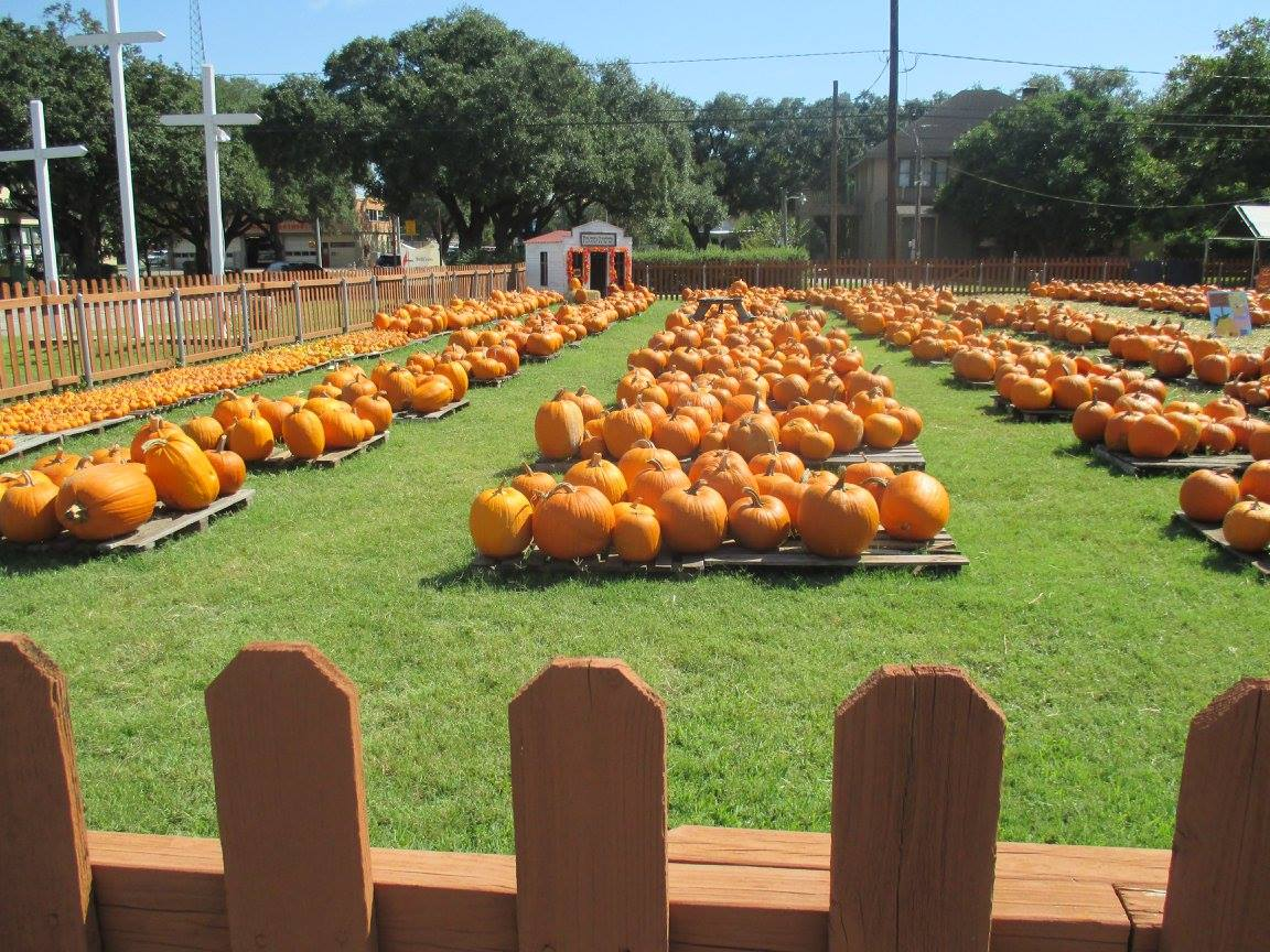 Pumpkin Patch 2015 - 12120030_10153209195652404_2310928181055791990_o.jpg