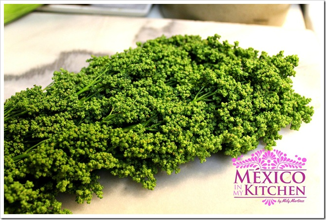 How to cook Huauzontles Patties   Mexican Recipes