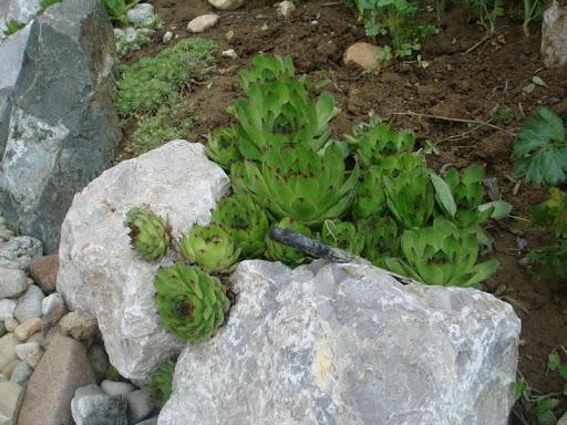 Moja cvijetna razbibriga - Cvijet.info FORUM - Stranica 28