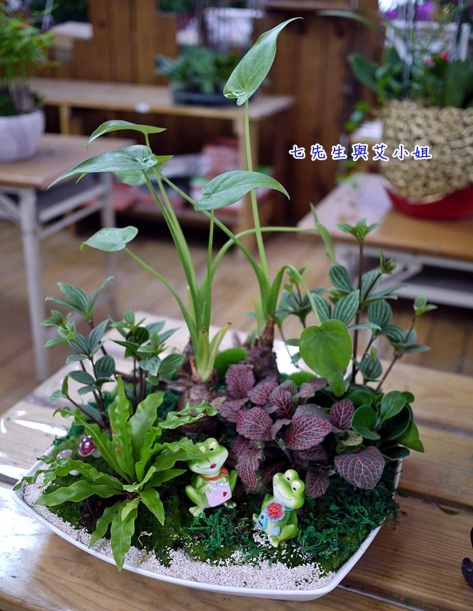 8 金羽庭花卉農場