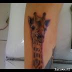 20-girafe.jpg