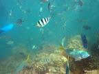 Fischalarm dank Fütterung