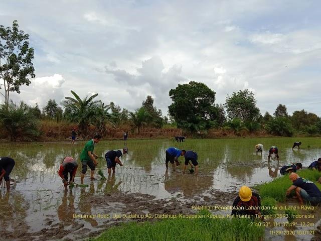Praktik Tanam Petani Dadahup Dorong Percepatan Luas Tambah Tanam Food Estate