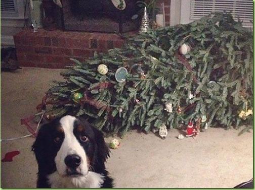 dog-knocked-over-tree-605x540