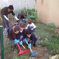 Limpiamos nuestro huerto con la ayuda de las mamás.jpg