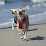 Arielle Tambini's profile photo