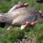 20140817_Fishing_Pugachivka_035.jpg