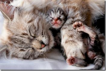 sviluppo gattino