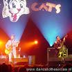 20080903 Stray Cats 007.jpg