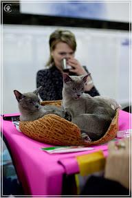 cats-show-24-03-2012-fife-spb-www.coonplanet.ru-082.jpg