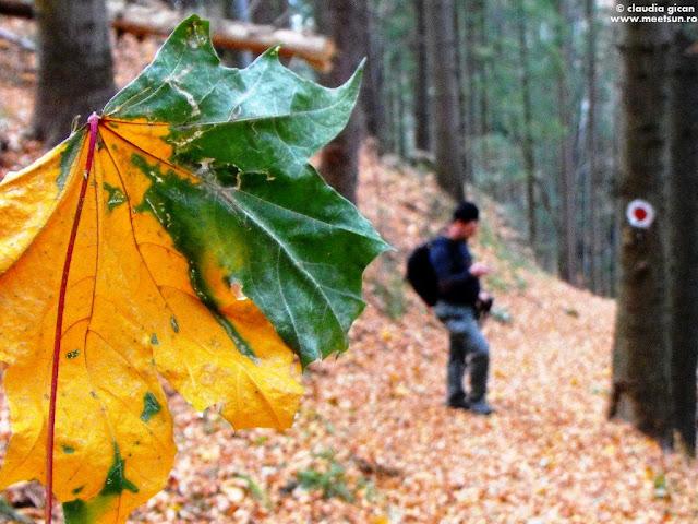 frunza de artar in prag de iarna
