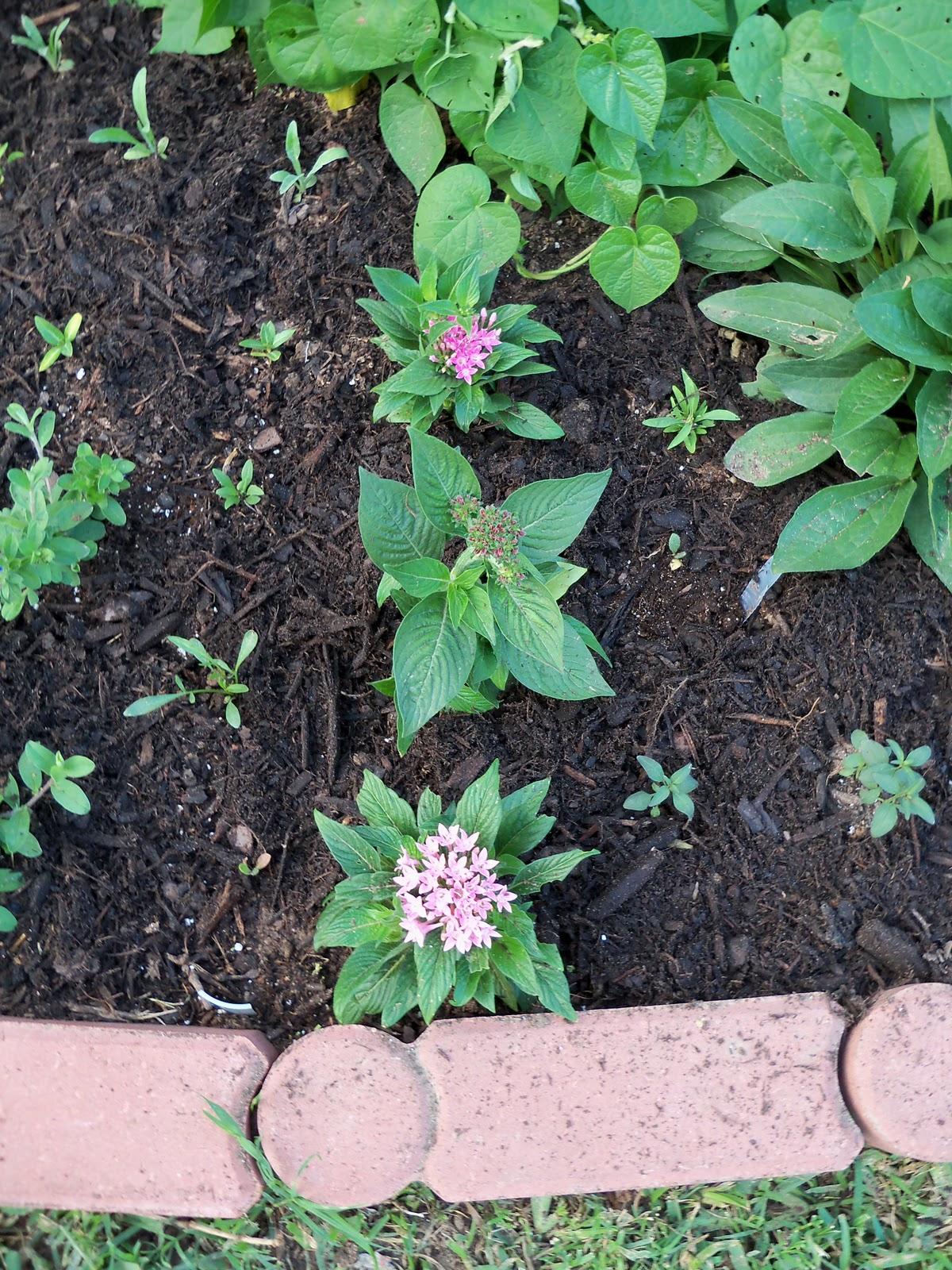 Gardening 2010, Part Two - 101_2011.JPG