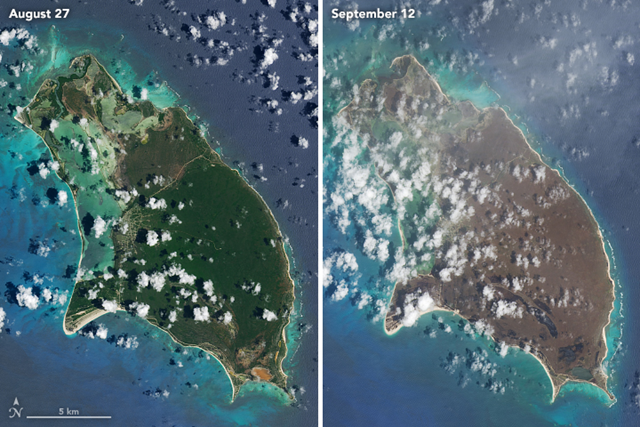 After Hurricane Irma, satellite images indicated a widespread browning of many Caribbean islands in the storm's destructive path. These natural-color images, captured by the Operational Land Imager (OLI) on the Landsat 8 satellite, show Barbuda before and after the storm. The views were acquired on 27 August 2017 and 12 September 2017. Photo: Joshua Stevens / NASA Earth Observatory