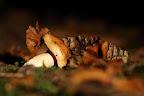 COURBETTES   Scène forestière d'automne ma fois très commune !