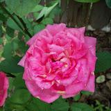 Gardening 2010, Part Three - 101_4877.JPG