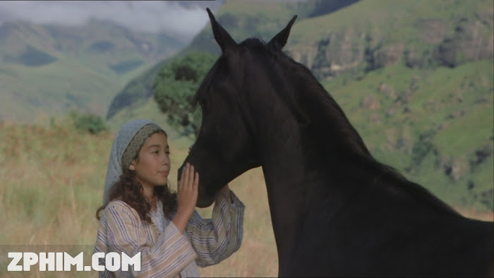 Ảnh trong phim Chú Ngựa Ô Choai - The Young Black Stallion 1