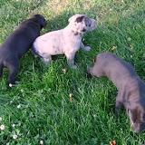 Serena & Jaspers 5-13-12 litter - SAM_3769.JPG