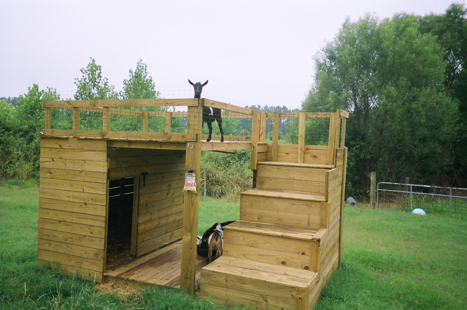 Dispatches from can of duck i am a deprived goat for Building a duck house shelter