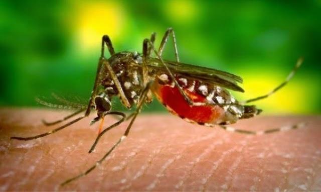 Virus denggi kini semakin bahaya