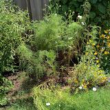 Gardening 2010, Part Three - 101_5116.JPG