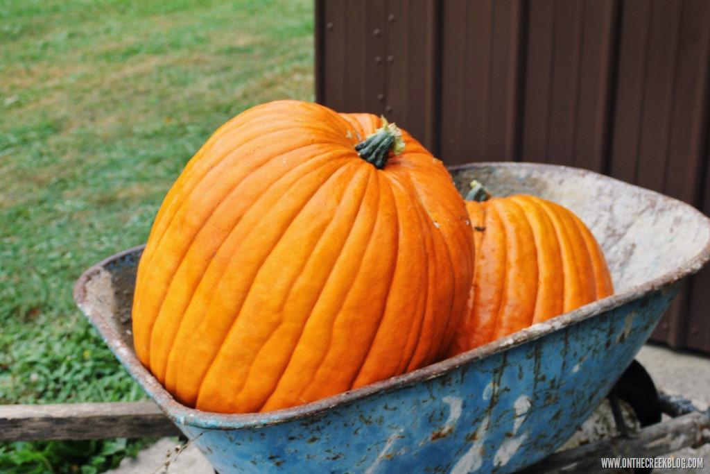 [pumpkin3%5B8%5D]