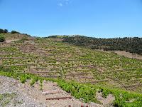 Vignobles en terrasse en descendant sur Banyuls